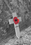 Poppy Day stock image