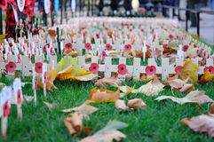Poppy Day crosses in Westminster Abbey Royalty Free Stock Images