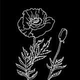 Poppy_design-element-black Stock Photography