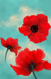 Poppy digital painting Royalty Free Stock Image