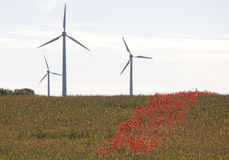 Poppy föpwers and rye field.GN Stock Photography