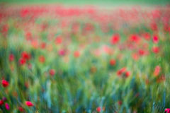 Poppy fieed background, swirly bokeh Royalty Free Stock Photo