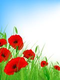 Poppy field. With clear blue sky and copyspace Stock Image