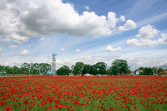 Poppy field. And windmill stock images