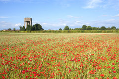 Poppy field. A poppy field in summer with beech hedgerow conifer trees and water tower under a blue sky Royalty Free Stock Photography