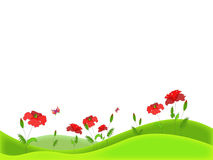 Poppy field. On white background Royalty Free Stock Photo
