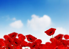 Free Poppy Field Royalty Free Stock Photo - 2582965