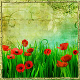 Poppy field. Beautiful vintage background with poppy field Royalty Free Stock Photography