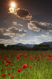 Poppy Field. Landscape with poppy field, sunny sky and clouds Stock Photos