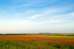 Free Poppy Field Stock Photos - 9833013