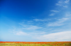 Poppy field against blue sky. Nature composition Stock Photos
