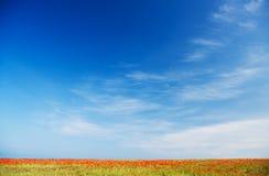 Poppy field against blue sky Stock Photos