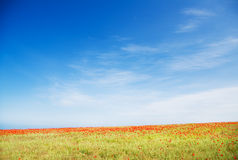 Poppy field against blue sky. Nature composition Stock Image