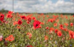 Poppy Field avec orageux Photos stock