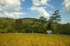 poppy field on Bali stock photo