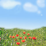 Poppy field and blue sky background. Blurred background with blue sky and poppy field Stock Image