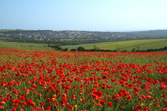 Poppy Field and Brighton Royalty Free Stock Photos
