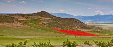 Poppy field in countryside. Scenic view of red poppy field in countryside with mountains in background Royalty Free Stock Image