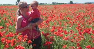 Poppy field. stock footage