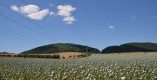 Poppy field. In the Czech Republic in the South Moravian Region Stock Photography