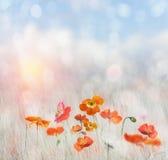 Poppy Field. Digital Painting Of  Poppy Flowers Royalty Free Stock Photography