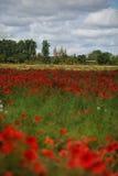 Poppy Field e cattedrale di Speyer fotografie stock