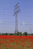 Poppy field and electricity Royalty Free Stock Photos