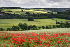 Poppy field in English countryside landscape Royalty Free Stock Photography