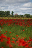 Poppy Field et cathédrale de Speyer Photos stock
