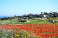 Poppy field and countryside, Malta. Poppy field and farmland near Dingli Cliffs during the Springtime, Malta, Europe Royalty Free Stock Photos