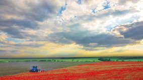 Poppy Field Harvesting stock footage
