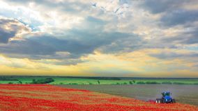 Poppy Field Harvesting stock video footage