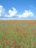 Poppy Field, Kap Arkona, isola di Ruegen, Mar Baltico, Germania Immagini Stock Libere da Diritti
