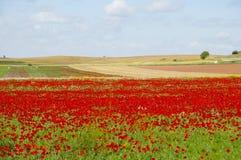 Poppy Field - l'Espagne Photographie stock