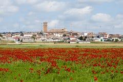 Poppy Field - l'Espagne Image stock