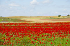 Poppy Field - la Spagna Fotografia Stock