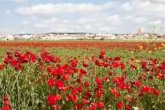 Poppy Field - la Spagna Immagini Stock Libere da Diritti