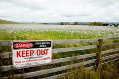 Poppy Field - la Tasmania - l'Australia Immagini Stock Libere da Diritti