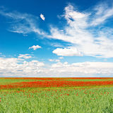 Poppy field. landscape Stock Photos