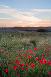 Poppy field landscape in countryside Stock Photography
