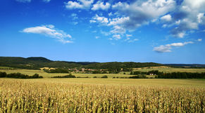 Poppy field landscape - Czech Republic. Wide view of poppy field with woods in background and clouds on a blue sky stock images
