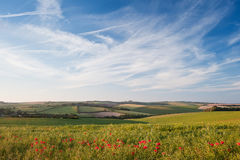 Poppy field landscape in English countryside Stock Images