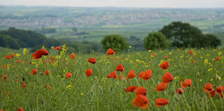 Poppy Field Landscape in the wind Stock Photos