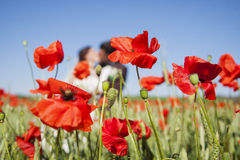 Poppy field and in love couple. Stock image stock image