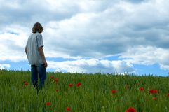 Poppy field and man Stock Photos