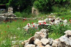 Poppy Field Near Historic Ruins. Red poppies in field with stone walls.  Ruins in the city of Ohrid, Macedonia Royalty Free Stock Photo