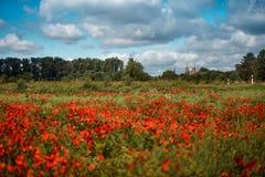 Poppy Field och Speyer domkyrka Royaltyfri Bild