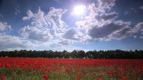 Poppy field. Panorama Stock Photos