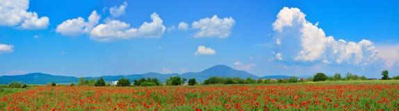 Poppy field panorama Royalty Free Stock Image