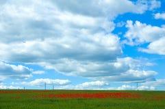 Poppy field with powerlines. Poppy field in green stock image